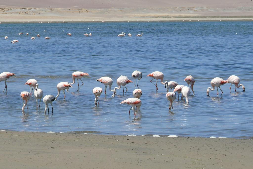 Lago na Reserva Nacional de Paracas - Peru