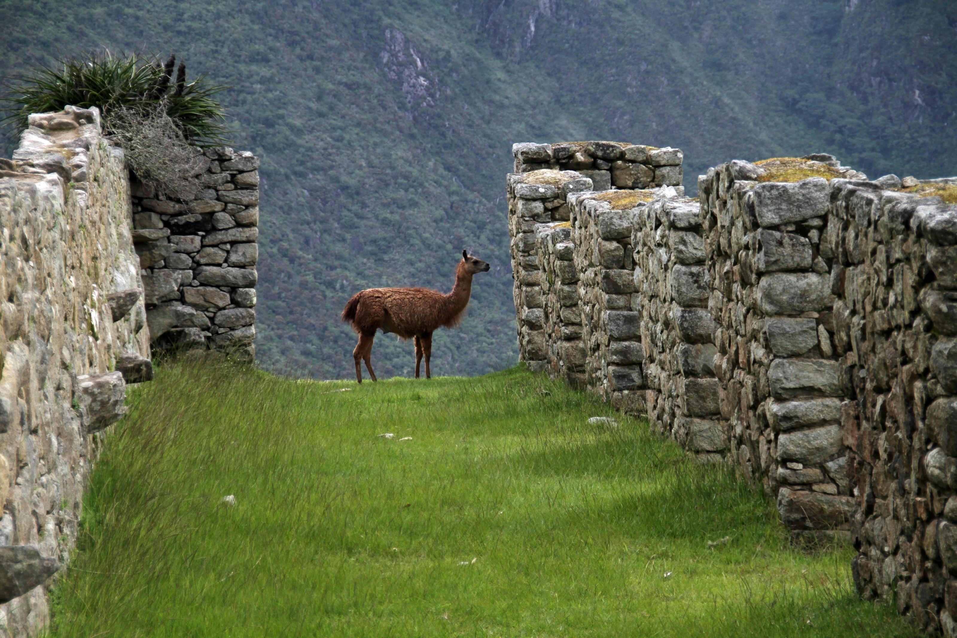 Blog Viagens Machu Picchu_Machu_Picchu