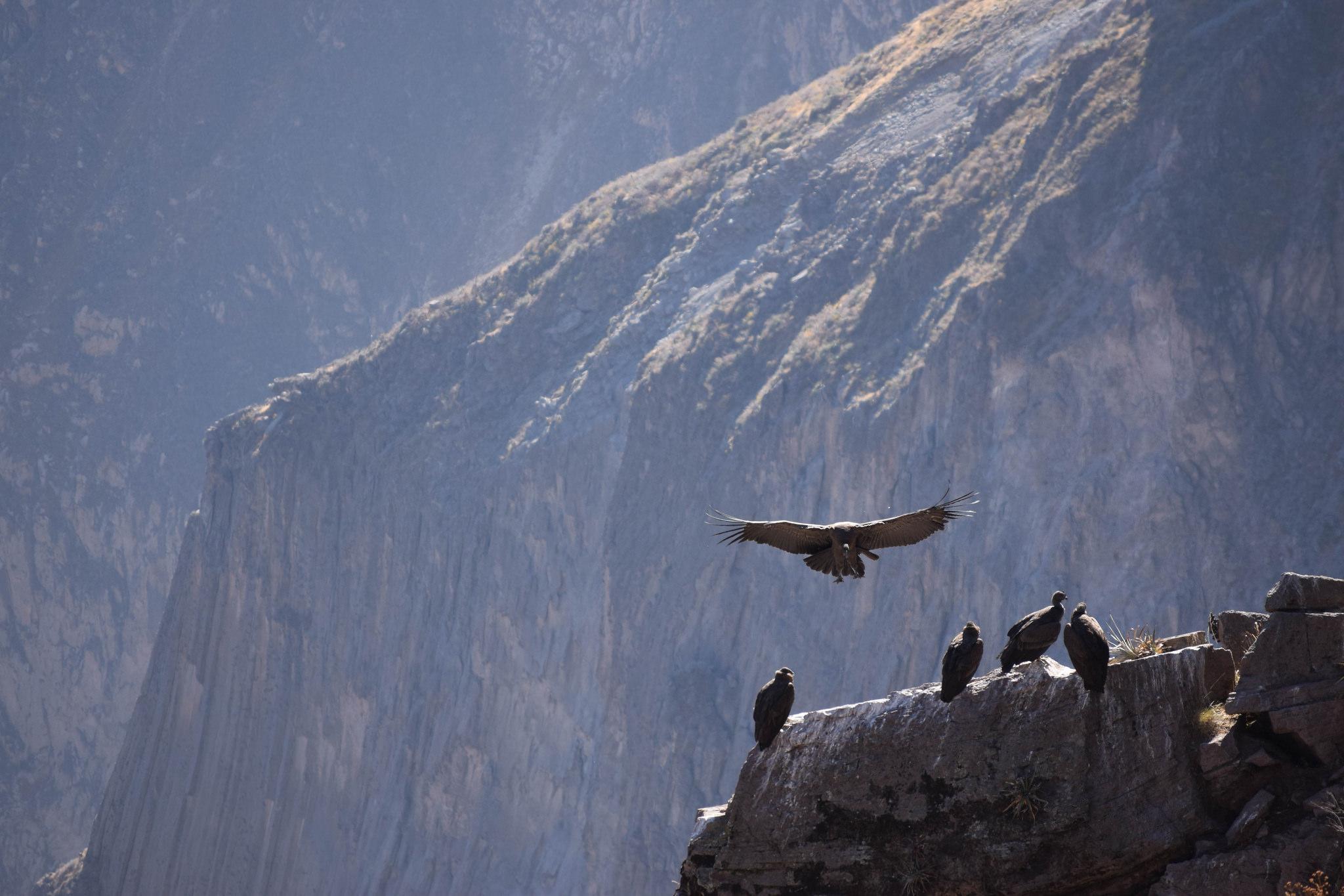 Blog Viagens Machu Picchu_Condor_photoby_esmeewinnubst_via_visualhunt